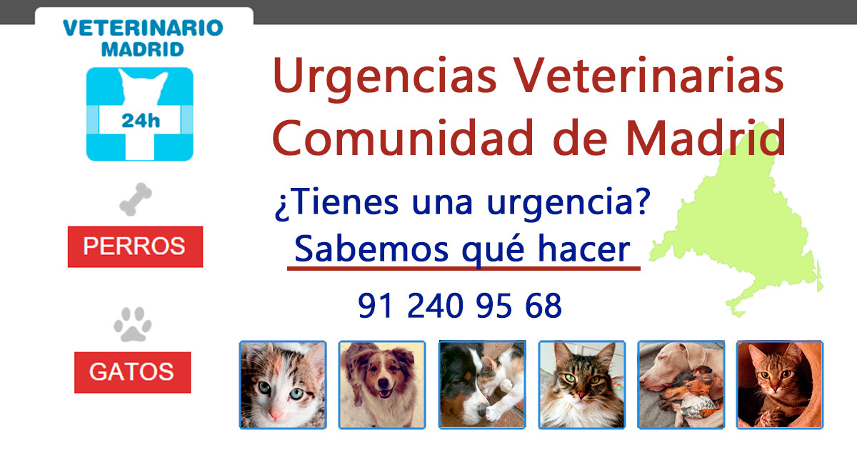 veterinarios 24 horas en madrid: